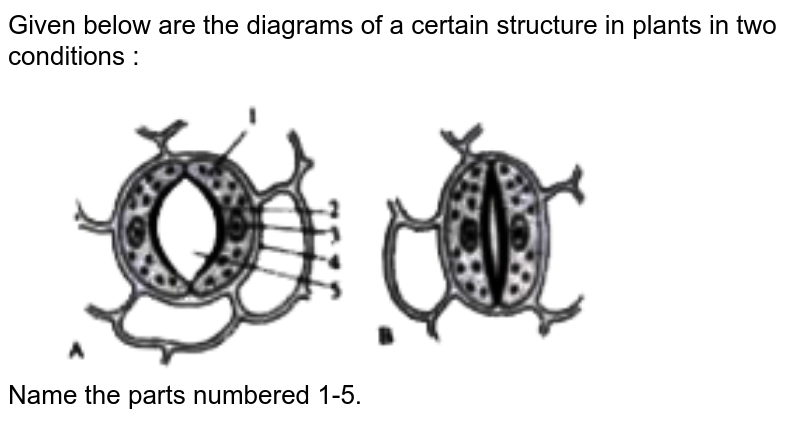 """Given below are the diagrams of a certain structure in plants in two conditions : <br> <img src=""""https://doubtnut-static.s.llnwi.net/static/physics_images/EVR_ANM_ICSE_BIO_X_C03_E01_068_Q01.png"""" width=""""80%""""> <br> Name the parts numbered 1-5."""