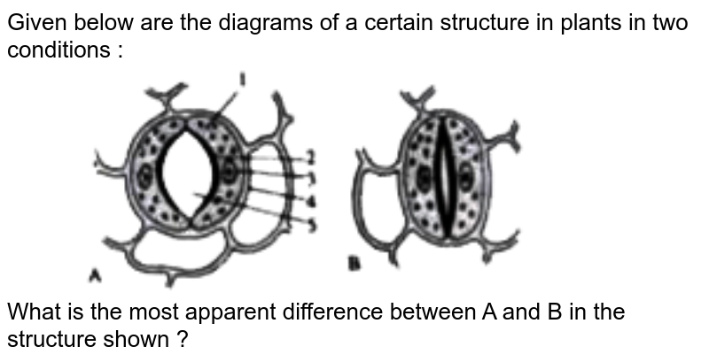 """Given below are the diagrams of a certain structure in plants in two conditions : <br> <img src=""""https://doubtnut-static.s.llnwi.net/static/physics_images/EVR_ANM_ICSE_BIO_X_C03_E01_069_Q01.png"""" width=""""80%""""> <br> What is the most apparent difference between A and B in the structure shown ?"""