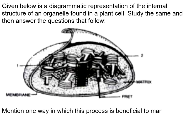 """Given below is a diagrammatic representation of the internal structure of an organelle found in a plant cell. Study the same and then answer the questions that follow: <br> <img src=""""https://doubtnut-static.s.llnwi.net/static/physics_images/EVR_ANM_ICSE_BIO_X_C05_E01_088_Q01.png"""" width=""""80%""""> <br> Mention one way in which this process is beneficial to man"""