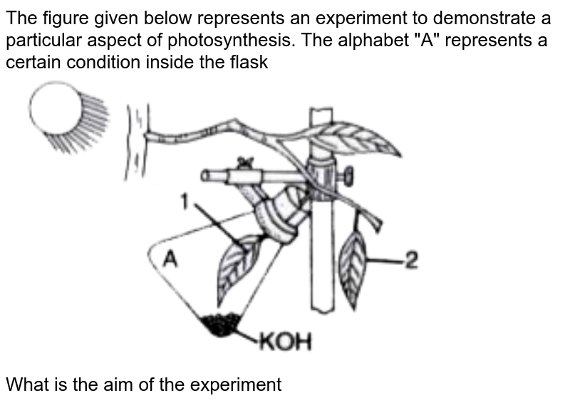 """The figure given below represents an experiment to demonstrate a particular aspect of photosynthesis. The alphabet """"A"""" represents a certain condition inside the flask <br> <img src=""""https://doubtnut-static.s.llnwi.net/static/physics_images/EVR_ANM_ICSE_BIO_X_C05_E01_154_Q01.png"""" width=""""80%""""> <br> What is the aim of the experiment"""