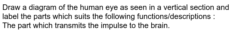 Draw a diagram of the human eye as seen in a vertical section and label the parts which suits the following functions/descriptions : <br> The part which transmits the impulse to the brain.