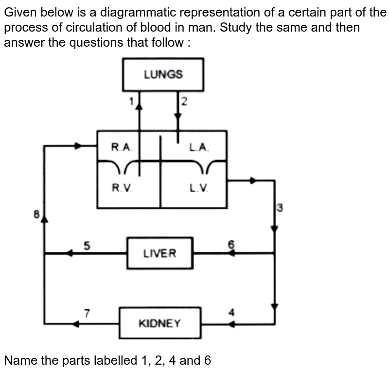 """Given below is a diagrammatic representation of a certain part of the process of circulation of blood in man. Study the same and then answer the questions that follow : <br> <img src=""""https://doubtnut-static.s.llnwi.net/static/physics_images/EVR_ANM_ICSE_BIO_X_C07_E01_109_Q01.png"""" width=""""80%""""> <br> Name the parts labelled 1, 2, 4 and 6"""