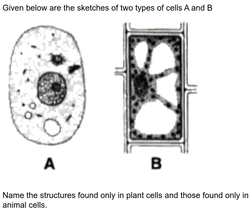 """Given below are the sketches of two types of cells A and B <br> <img src=""""https://doubtnut-static.s.llnwi.net/static/physics_images/SEL_HSV_ICSE_BIO_IX_C02_E02_059_Q01.png"""" width=""""80%""""> <br> Name the structures found only in plant cells and those found only in animal cells."""