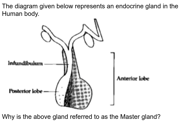 """The diagram given below represents an endocrine gland in the Human body. <br> <img src=""""https://doubtnut-static.s.llnwi.net/static/physics_images/OSW_ICSE_SQP_BIO_X_QP_01_E01_063_Q01.png"""" width=""""80%""""> <br> Why is the above gland referred to as the Master gland?"""