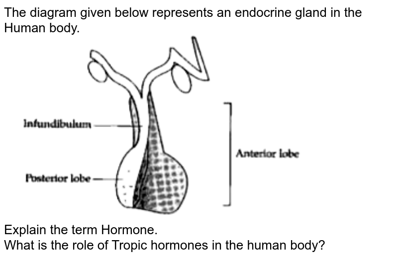 """The diagram given below represents an endocrine gland in the Human body. <br> <img src=""""https://doubtnut-static.s.llnwi.net/static/physics_images/OSW_ICSE_SQP_BIO_X_QP_01_E01_065_Q01.png"""" width=""""80%""""> <br> Explain the term Hormone. <br> What is the role of Tropic hormones in the human body?"""