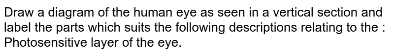Draw a diagram of the human eye as seen in a vertical section and label the parts which suits the following descriptions relating to the :  <br> Photosensitive layer of the eye.