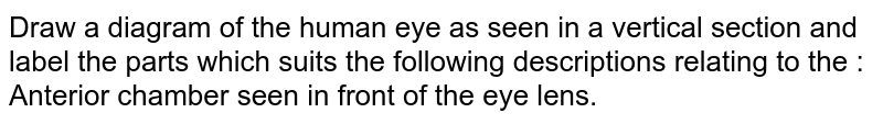Draw a diagram of the human eye as seen in a vertical section and label the parts which suits the following descriptions relating to the :  <br> Anterior chamber seen in front of the eye lens.