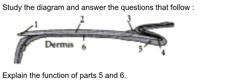 """Study the diagram and answer the questions that follow : <br> <img src=""""https://doubtnut-static.s.llnwi.net/static/physics_images/OSW_ICSE_QB_BIO_IX_C12_E02_026_Q01.png"""" width=""""80%""""> <br> Explain the function of parts 5 and 6."""