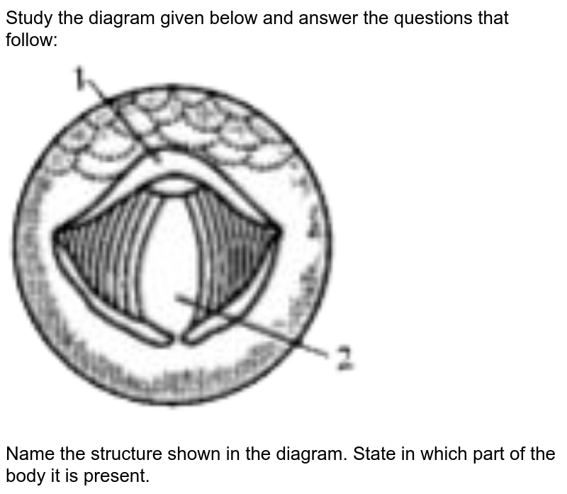 """Study the diagram given below and answer the questions that follow: <br> <img src=""""https://doubtnut-static.s.llnwi.net/static/physics_images/OSW_ICSE_QB_BIO_IX_C13_E01_052_Q01.png"""" width=""""80%""""> <br> Name the structure shown in the diagram. State in which part of the body it is present."""