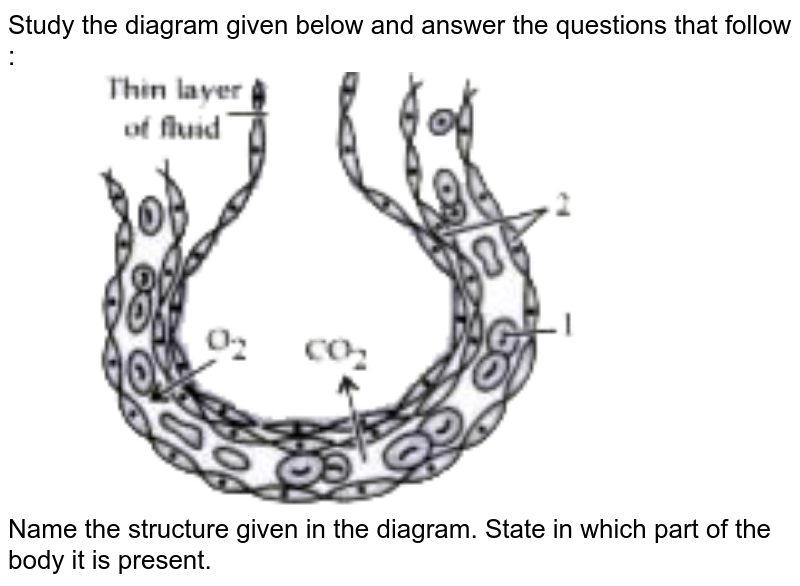 """Study the diagram given below and answer the questions that follow : <br> <img src=""""https://doubtnut-static.s.llnwi.net/static/physics_images/OSW_ICSE_QB_BIO_IX_C13_E02_018_Q01.png"""" width=""""80%""""> <br> Name the structure given in the diagram.  State in which part of the body it is present."""