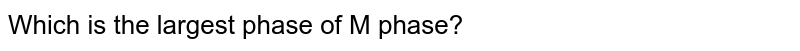 Which is the largest phase of M phase?