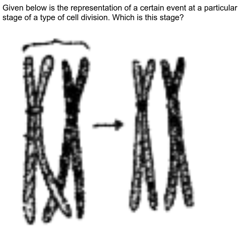 """Given below is the representation of a certain event at a particular stage of a type of cell division. Which is this stage?  <br> <img src=""""https://doubtnut-static.s.llnwi.net/static/physics_images/SASA_NJA_OBJ_BIO_V01_C10_E01_172_Q01.png"""" width=""""80%"""">"""