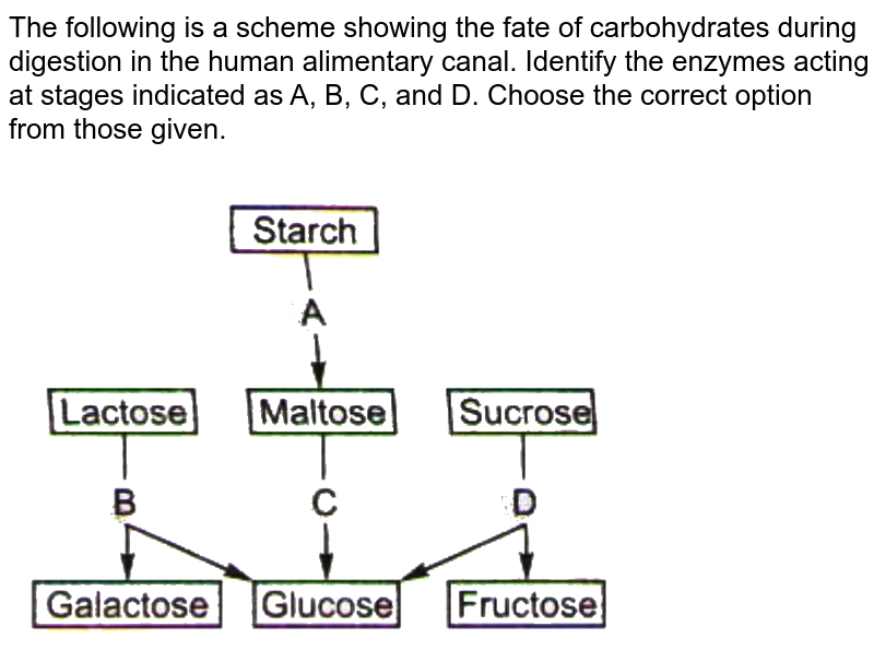 """The following is a scheme showing the fate of carbohydrates during digestion in the human alimentary canal. Identify the enzymes acting at stages indicated as A, B, C, and D. Choose the correct option from those given. <br> <img src=""""https://d10lpgp6xz60nq.cloudfront.net/physics_images/NTA_NEET_SET_20_E03_076_Q01.png"""" width=""""80%"""">"""