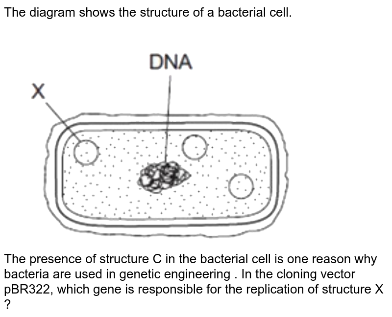 """The diagram shows the structure of a bacterial cell. <br> <img src=""""https://d10lpgp6xz60nq.cloudfront.net/physics_images/NTA_NEET_SET_30_E03_046_Q01.png"""" width=""""80%""""> <br> The presence of structure C in the bacterial cell is one reason why bacteria are used in genetic engineering . In the cloning vector pBR322, which gene is responsible for the replication of structure X ?"""