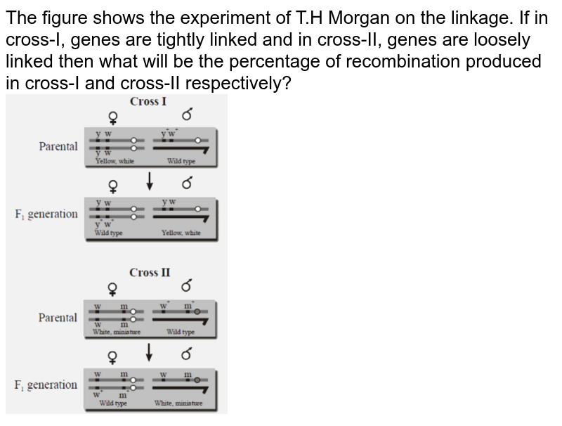 """The figure shows the experiment of T.H Morgan on the linkage. If in cross-I, genes are tightly linked and in cross-II, genes are loosely linked then what will be the percentage of recombination produced in cross-I and cross-II respectively? <br> <img src=""""https://d10lpgp6xz60nq.cloudfront.net/physics_images/NTA_NEET_SET_116_E03_027_Q01.png"""" width=""""40%"""">"""