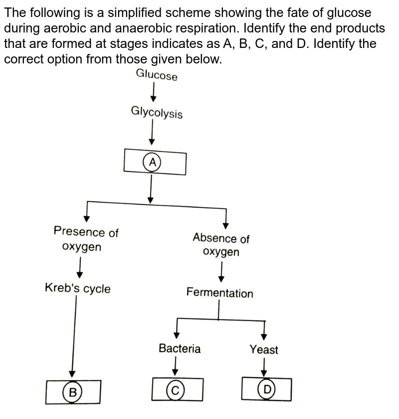 """The following is a simplified scheme showing the fate of glucose during aerobic and anaerobic respiration. Identify the end products that are formed at stages indicates as A, B, C, and D. Identify the correct option from those given below. <br> <img src=""""https://d10lpgp6xz60nq.cloudfront.net/physics_images/OBJ_NEET_BIO_V01_C14_E01_137_Q01.png"""" width=""""80%"""">"""