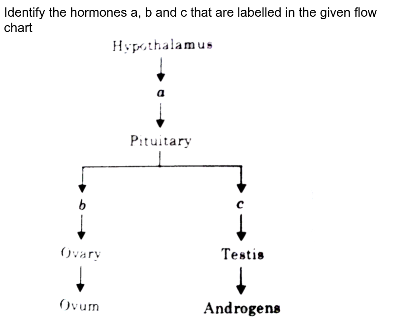 """Identify the hormones a, b and c that are labelled in the given flow chart <br> <img src=""""https://d10lpgp6xz60nq.cloudfront.net/physics_images/DIN_OBJ_BIO_V02_C22_E01_496_Q01.png"""" width=""""80%"""">"""