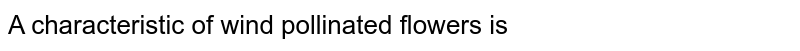 A characteristic of wind pollinated flowers is