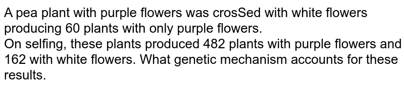 A pea plant with purple flowers was crosSed with white flowers producing 60 plants with only purple flowers.<br>  On selfing, these plants produced 482 plants with purple flowers and 162 with white flowers. What genetic mechanism accounts for these results.