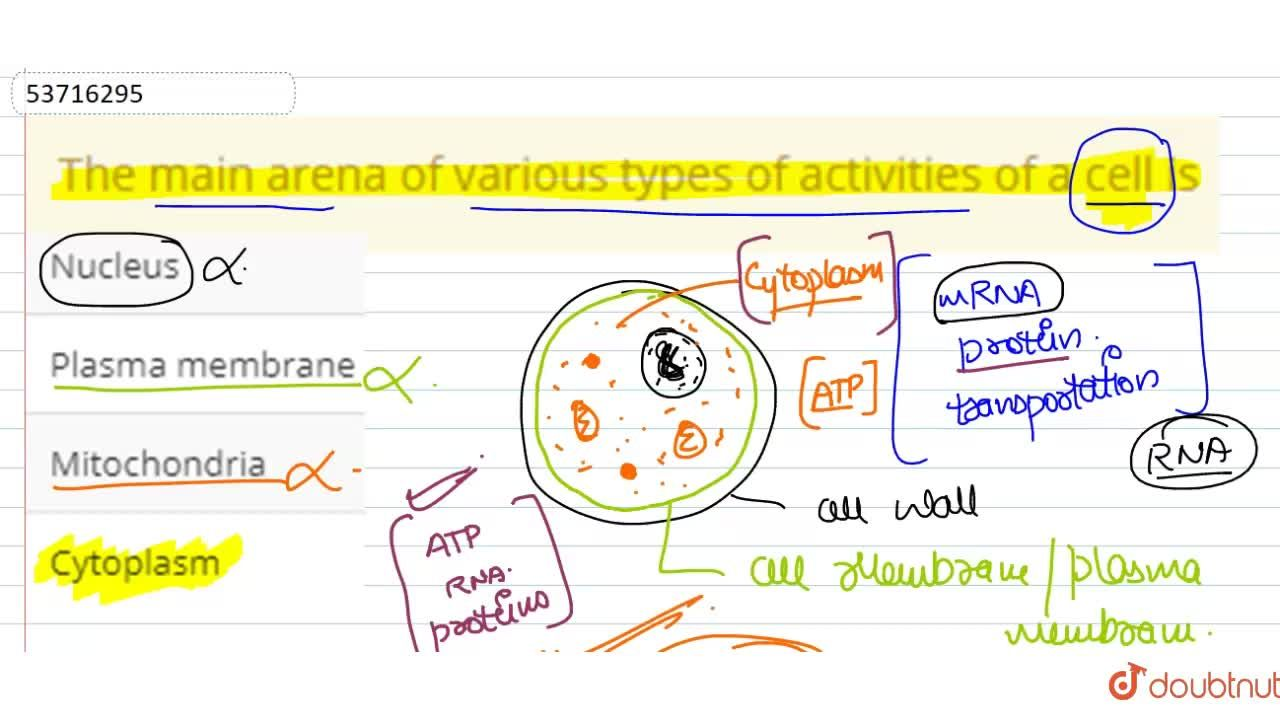 Solution for The main arena of various types of activities of a