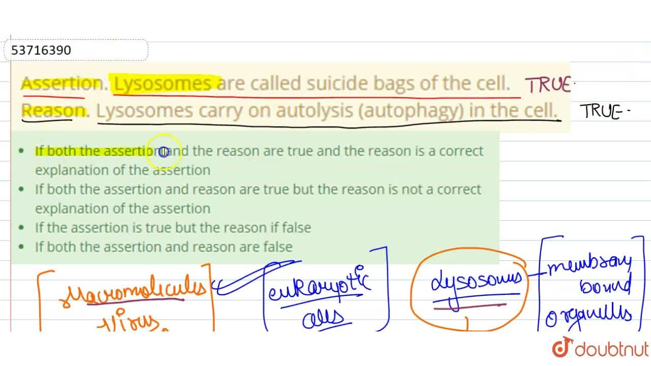 Solution for Assertion. Lysosomes are called suicide bags of th