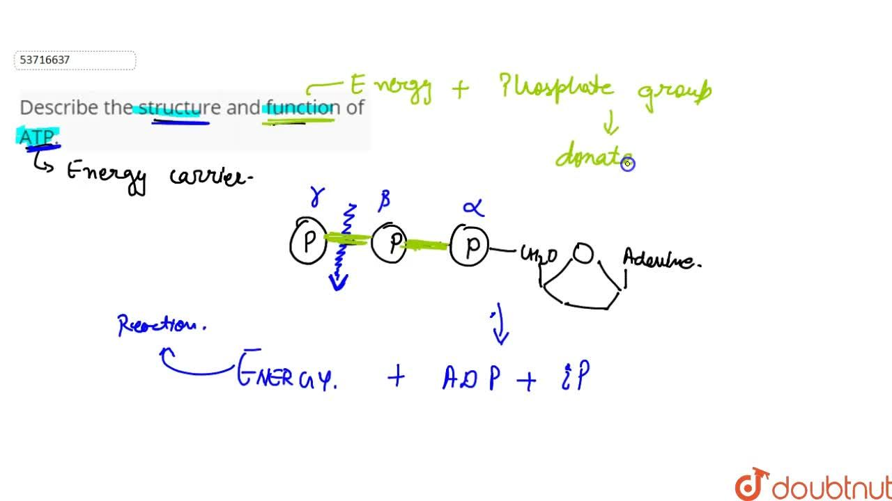 Solution for Describe the structure and function of ATP.
