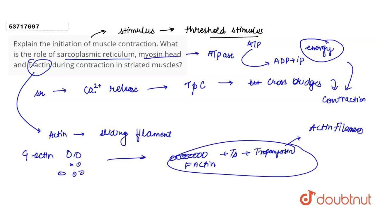 Solution for Explain the  initiation of muscle contraction. Wha