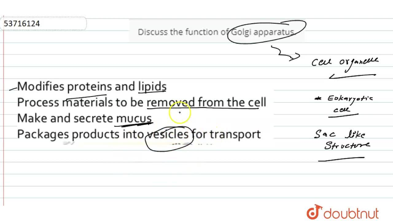 Discuss the function of Golgi apparatus.