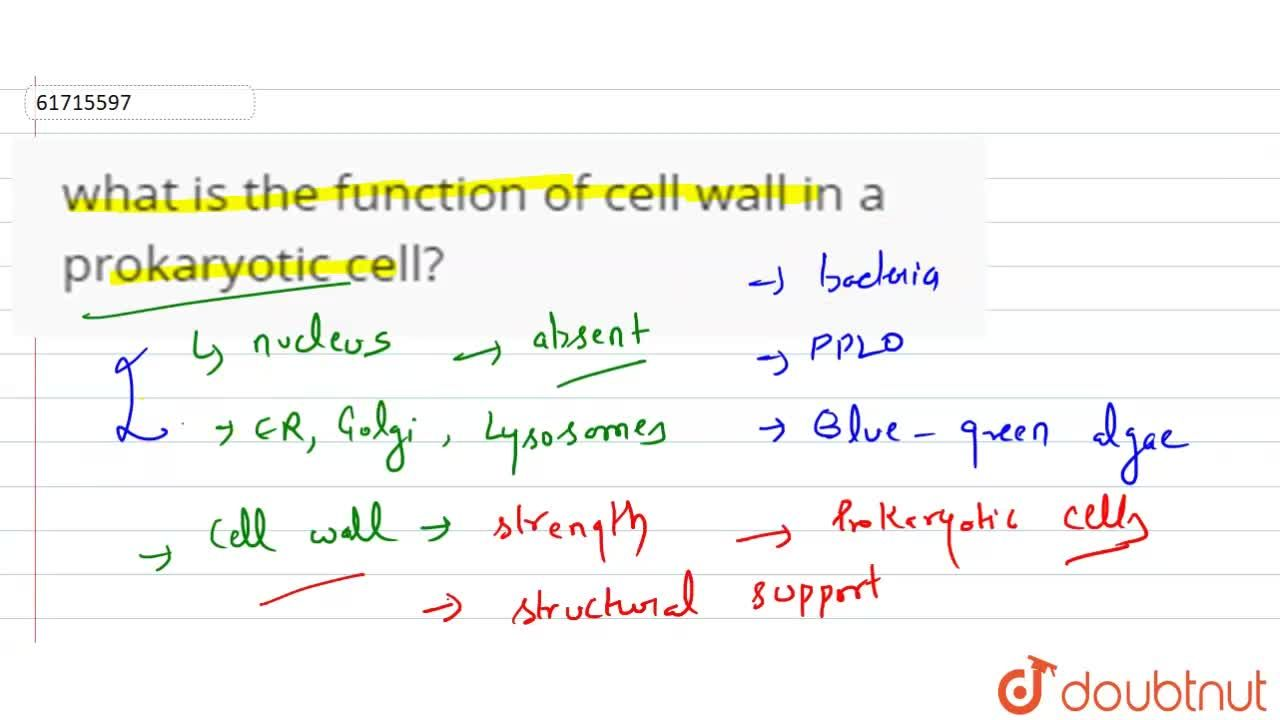 Solution for what is the function of cell wall in a prokaryotic