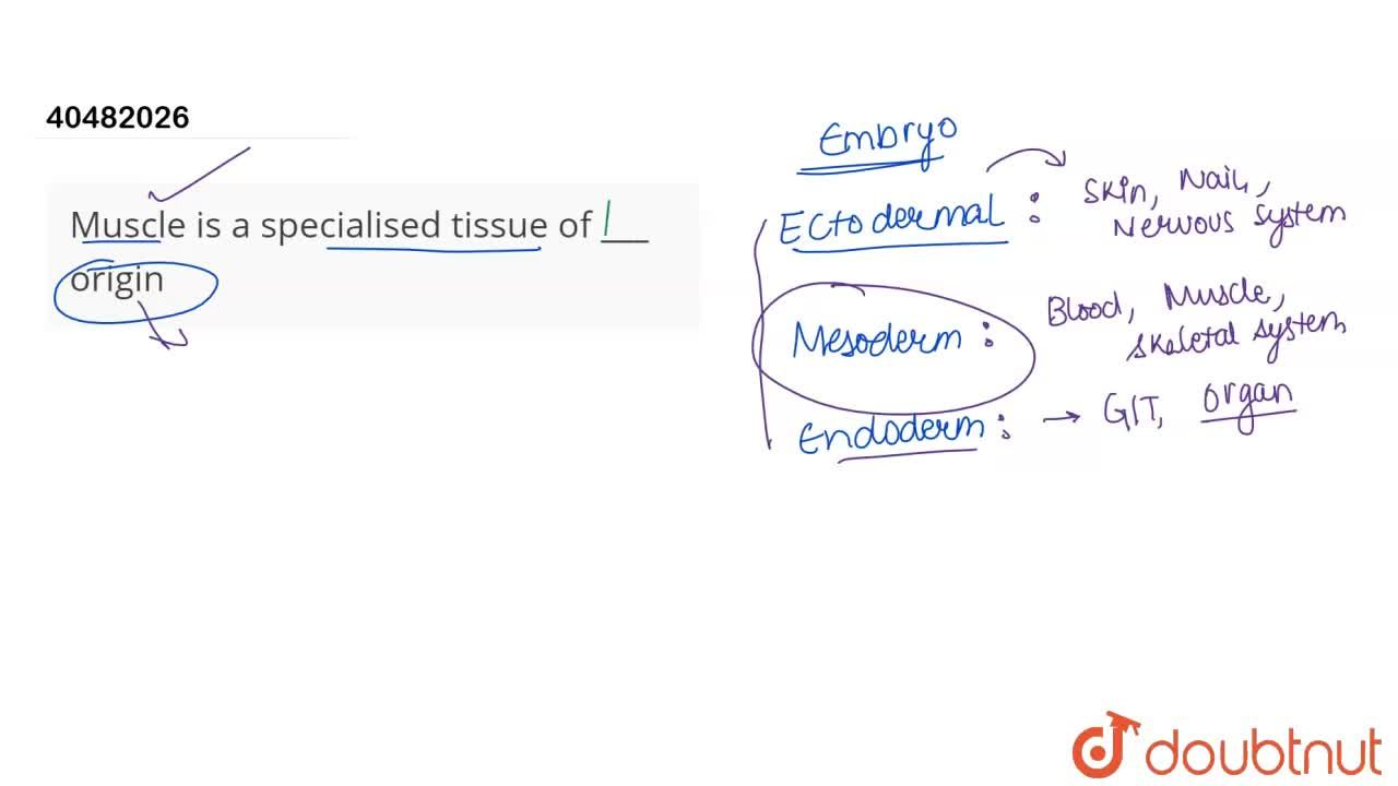 Solution for Muscle is a specialised tissue of ___ origin