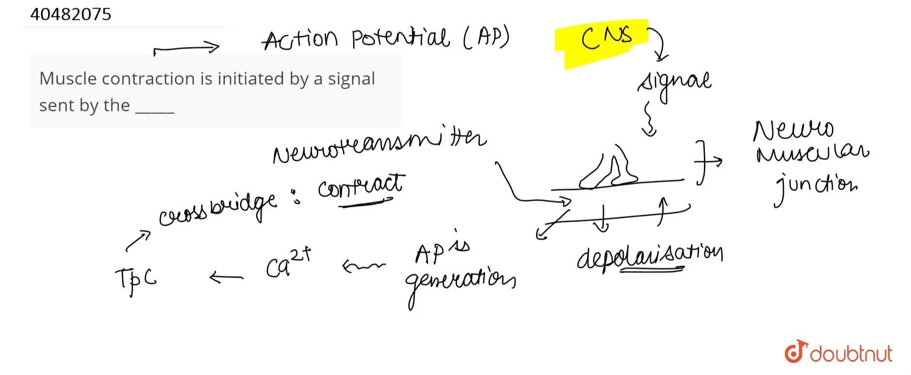 Solution for Muscle contraction is initiated by a signal sent b