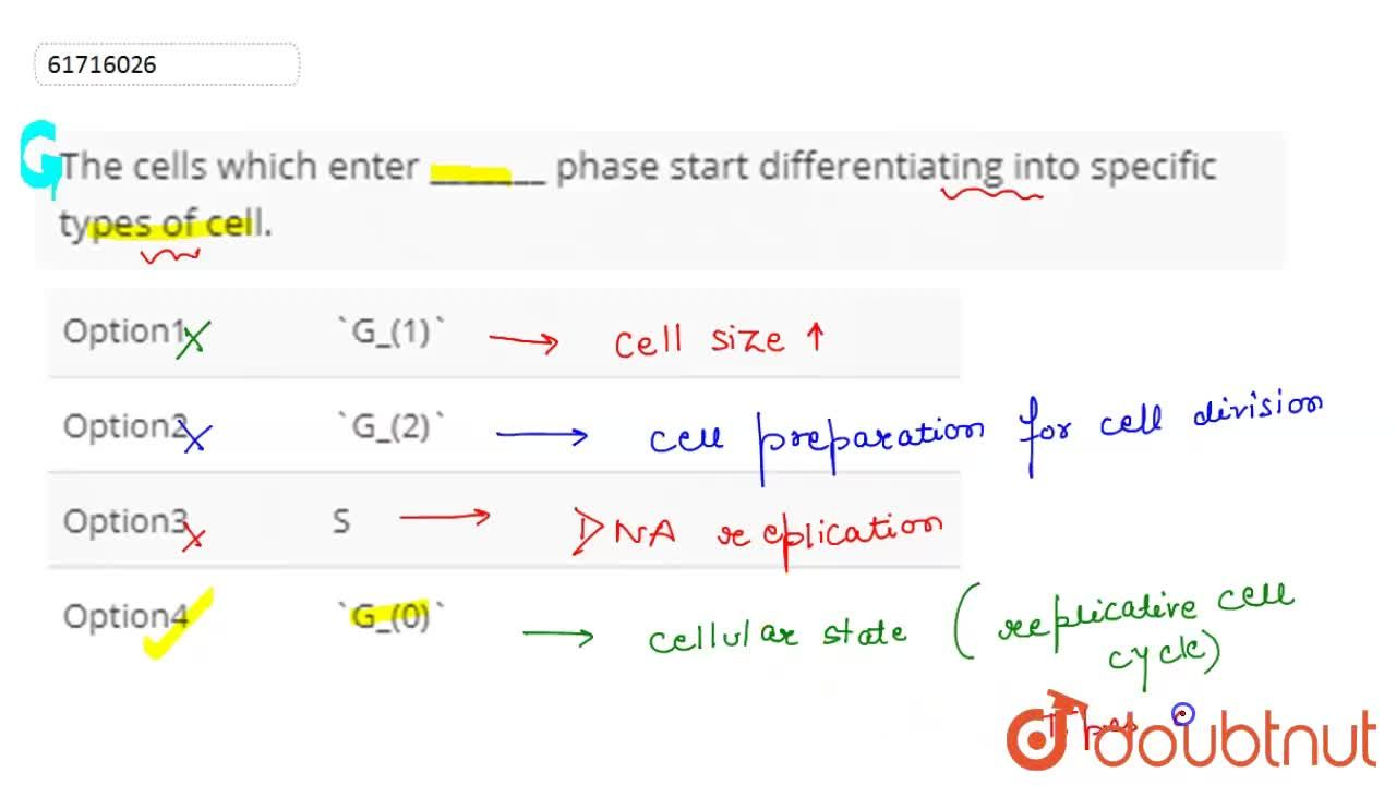 Solution for The cells which enter _______ phase start differen