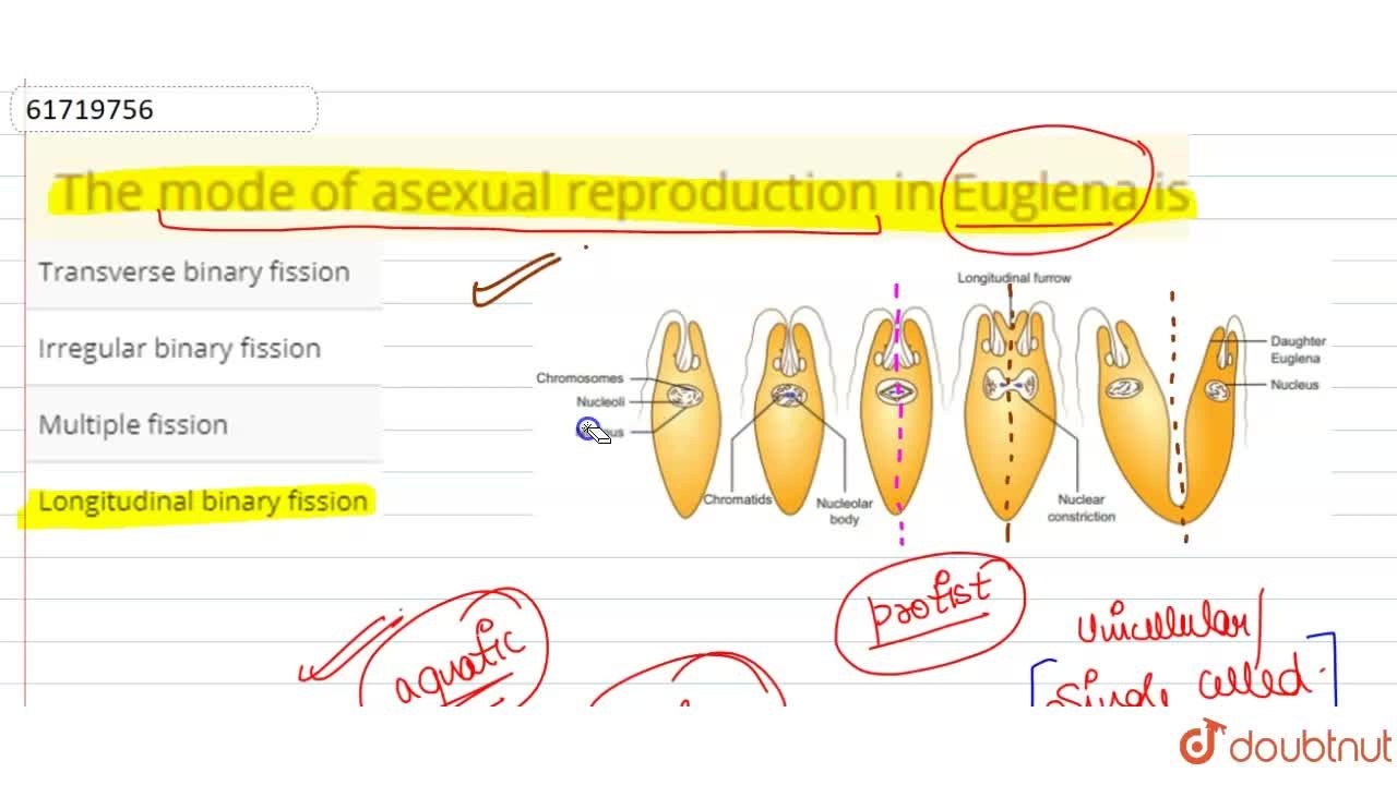 Solution for The mode of asexual reproduction in Euglena is