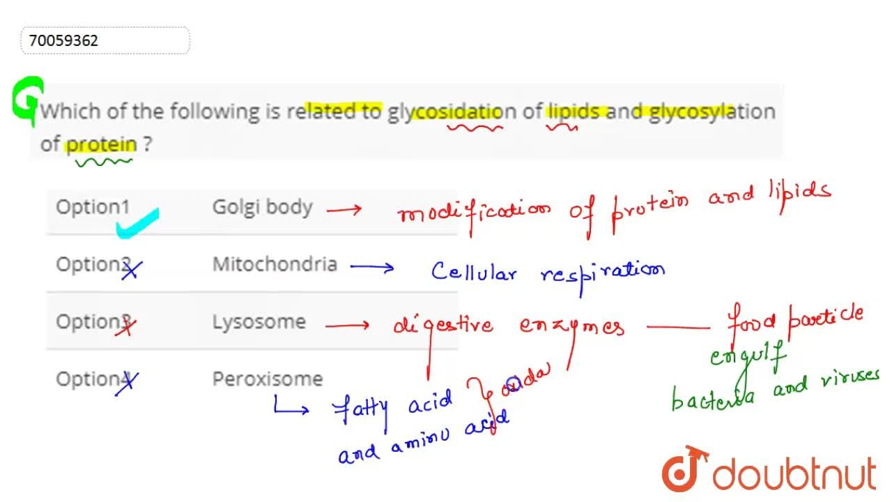 Solution for Which  of  the following is  related to glycosidat
