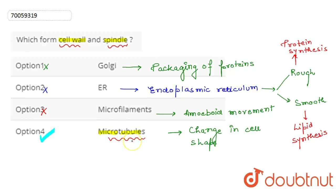 Solution for Which form cell  wall  and spindle ?