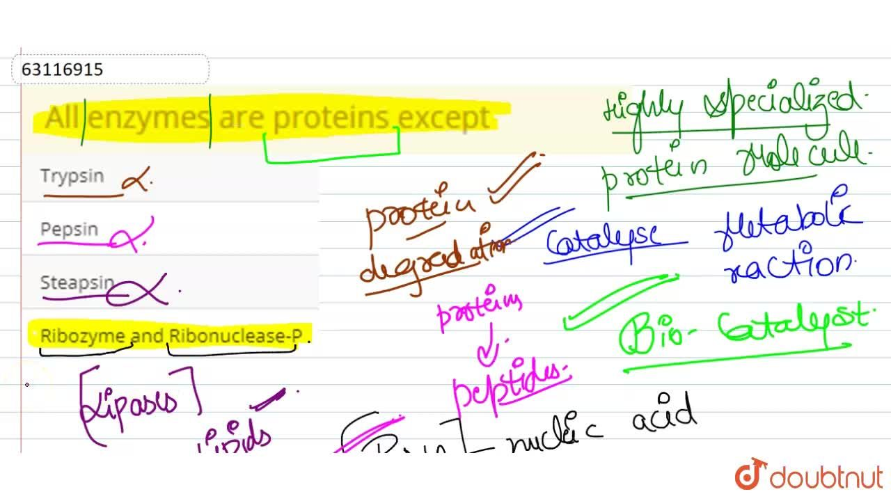 Solution for All enzymes are proteins except