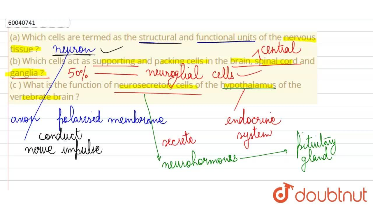 Solution for (a) Which cells are termed as the structural and