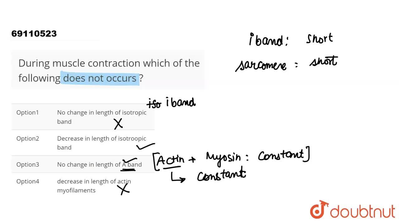 Solution for During  muscle  contraction   which of the  follow