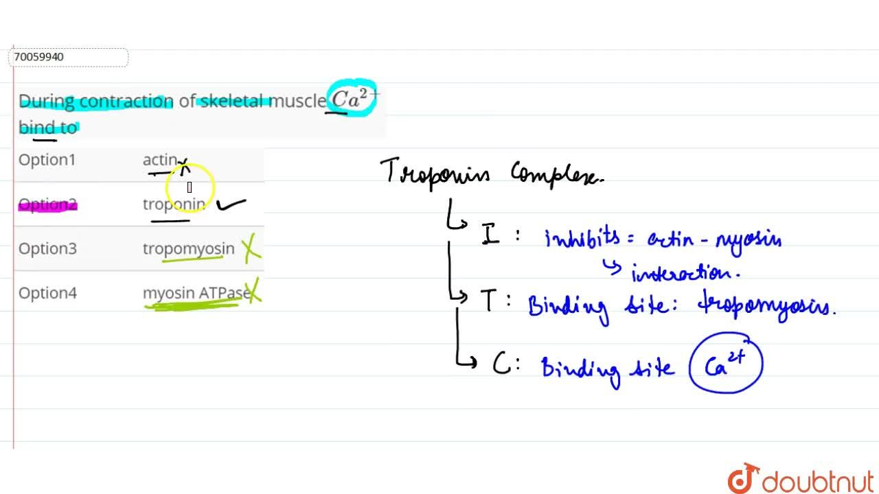 Solution for During contraction of skeletal muscle Ca^(2+) bi