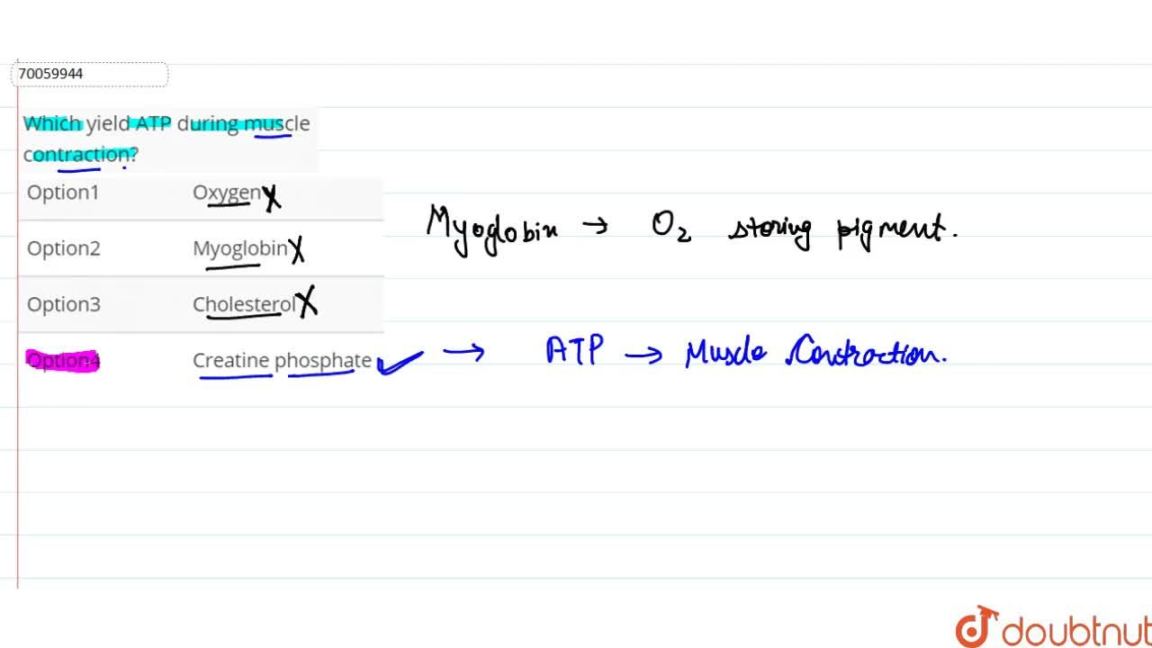 Solution for Which yield ATP during muscle contraction?