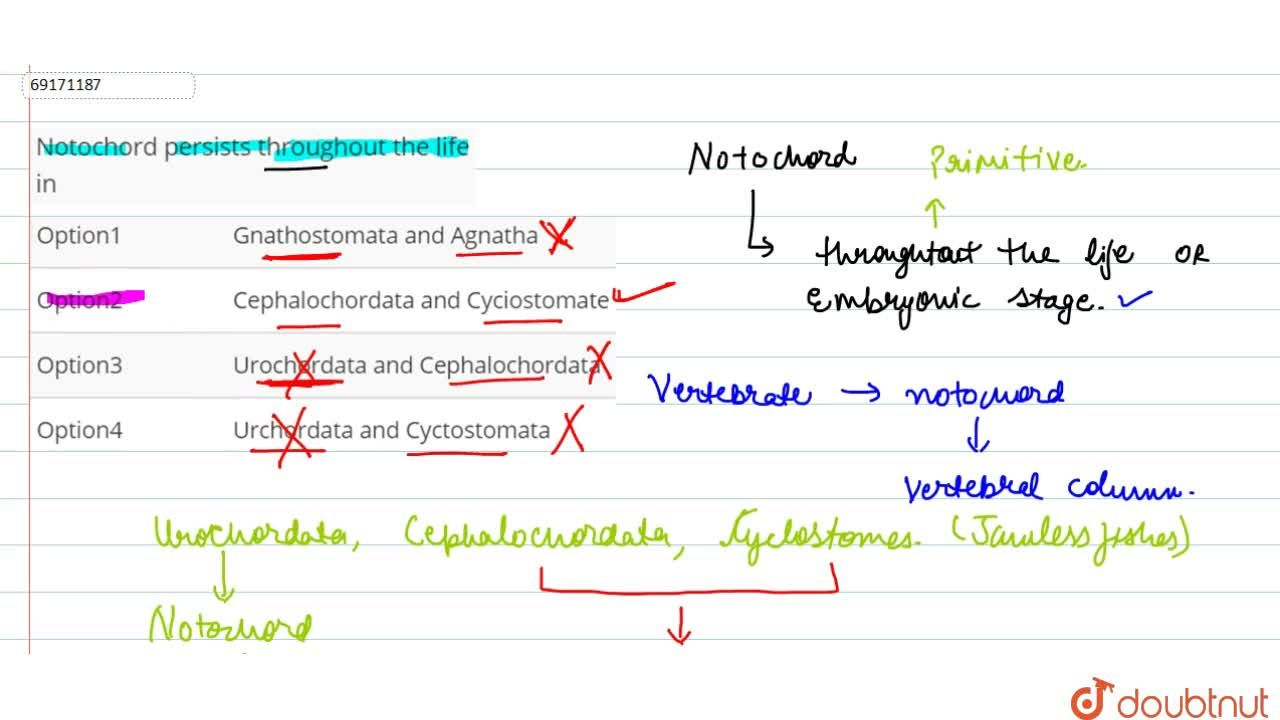 Solution for Notochord persists throughout the life in