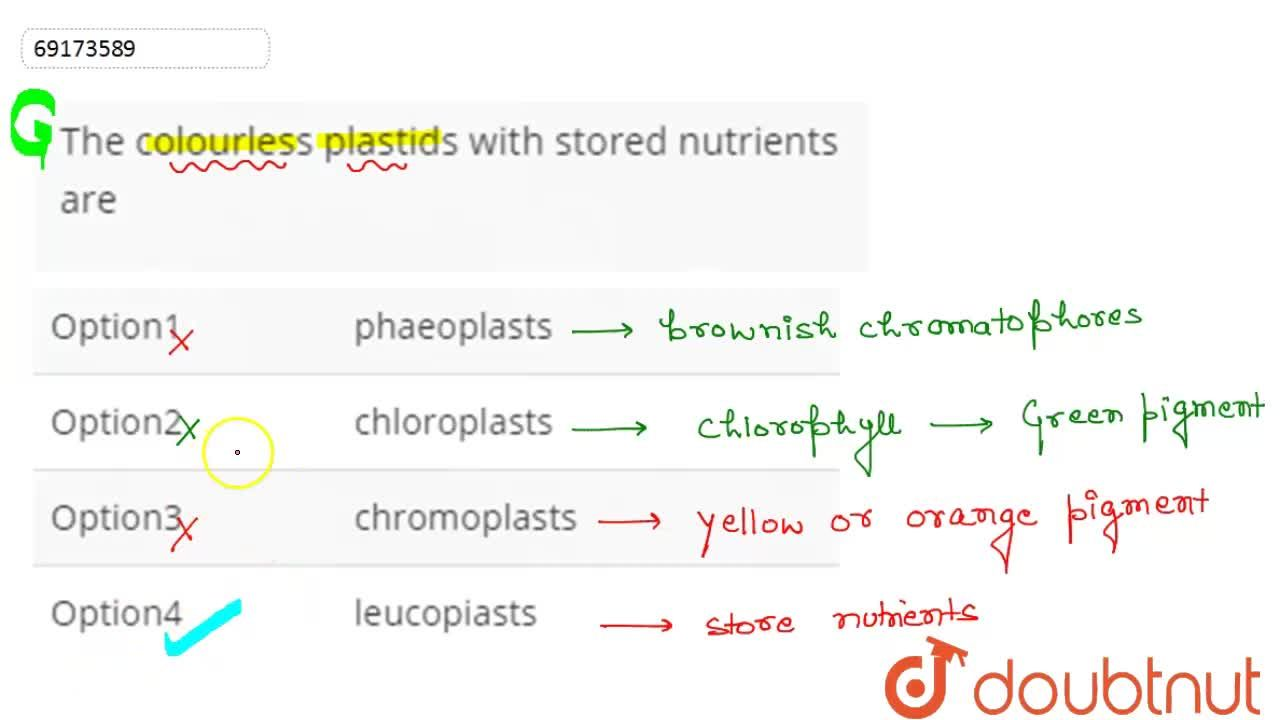 The colourless plastids with stored nutrients are
