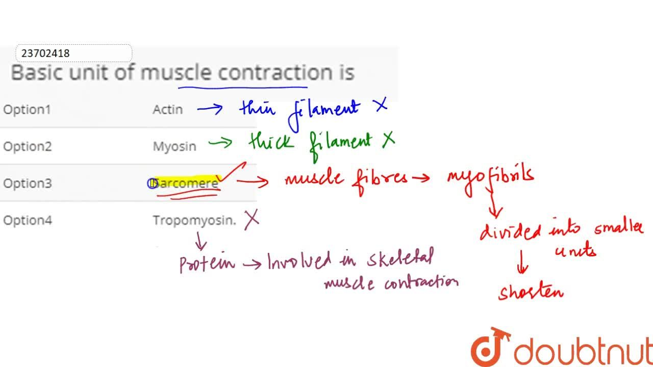 Solution for Basic unit of muscle contraction is