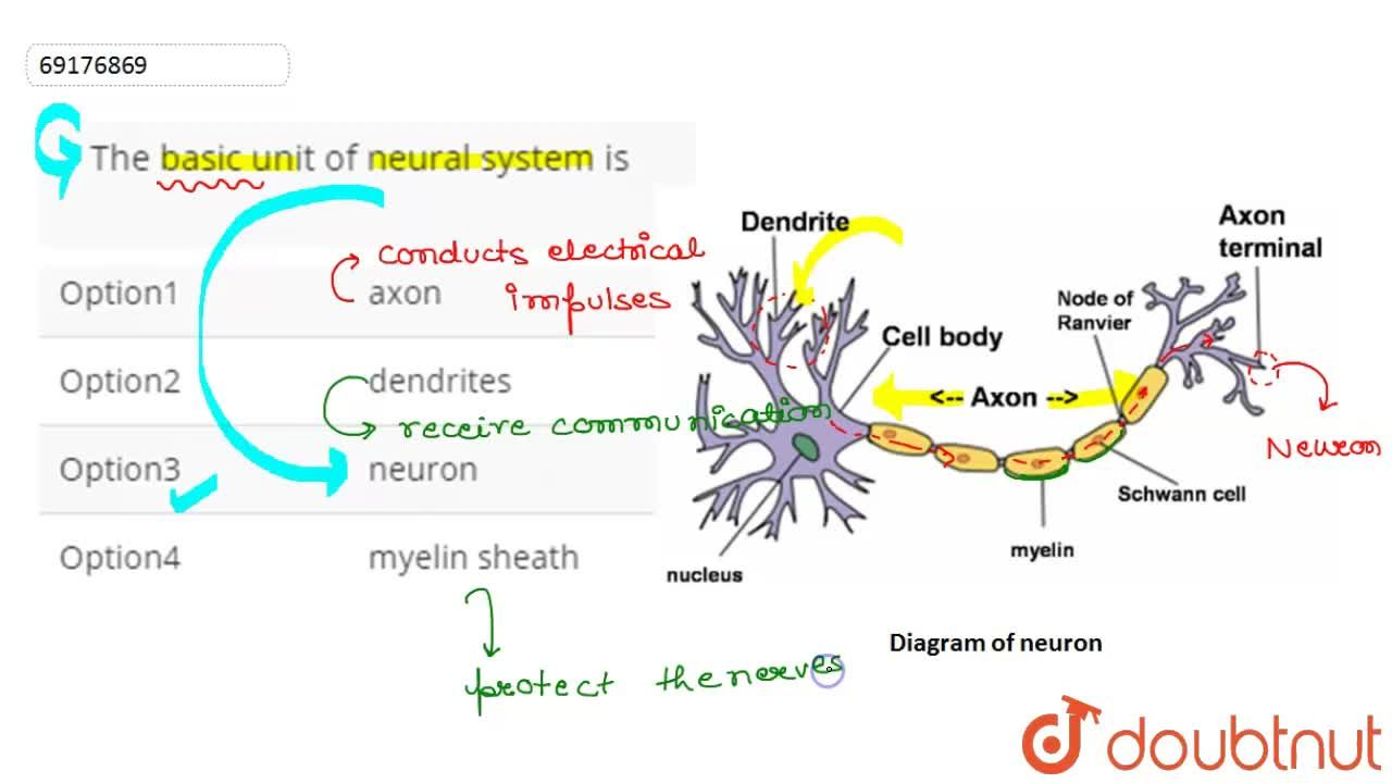 Solution for The basic unit of neural system is