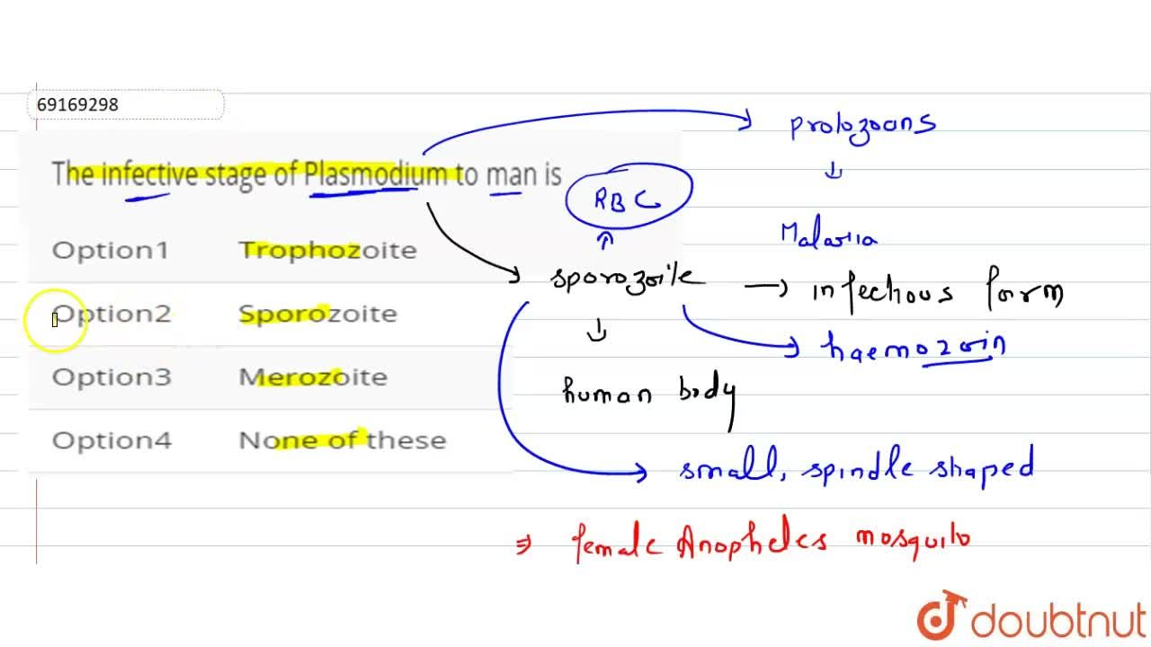 Solution for The infective stage of Plasmodium to man is