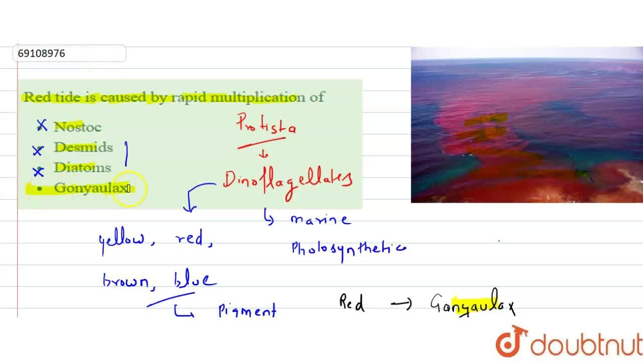 Solution for Red tide is caused by rapid multiplication of