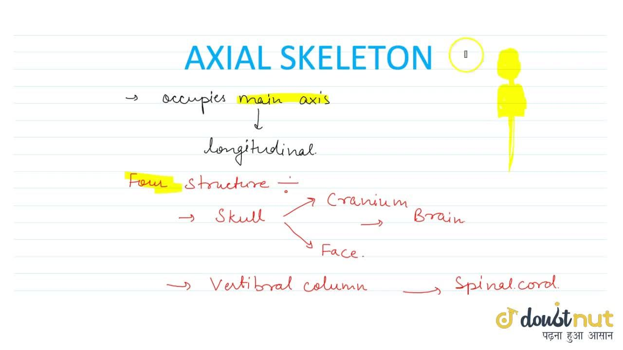 Solution for Axial Skeleton