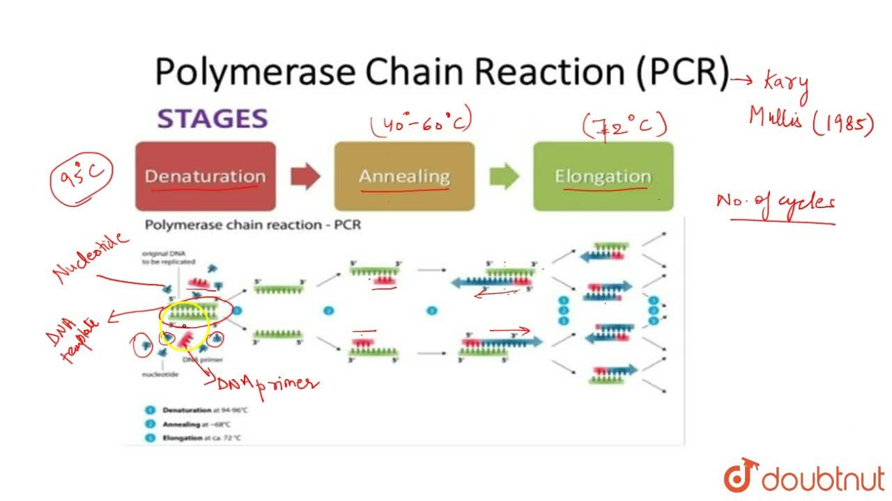 Solution for Amplification Of Gene Of Interest Using Pcr
