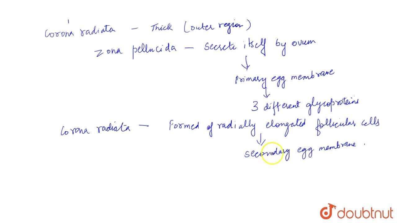 Solution for Structure Of Ovum