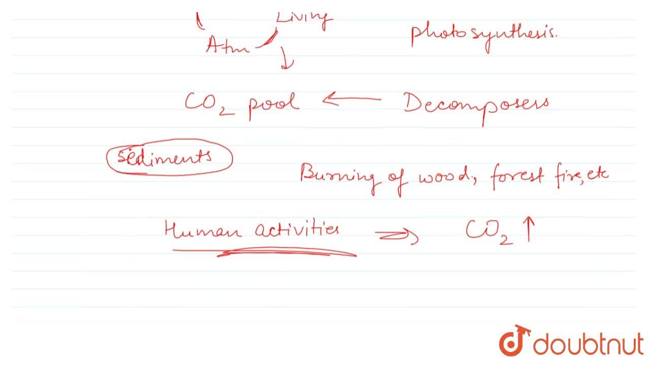 Solution for ECOSYSTEM – CARBON CYCLE